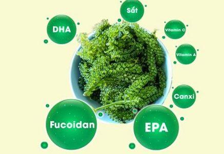 hợp chất fucoidan